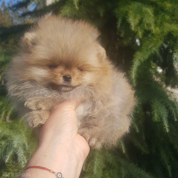 Развъждаме щастливи кученца